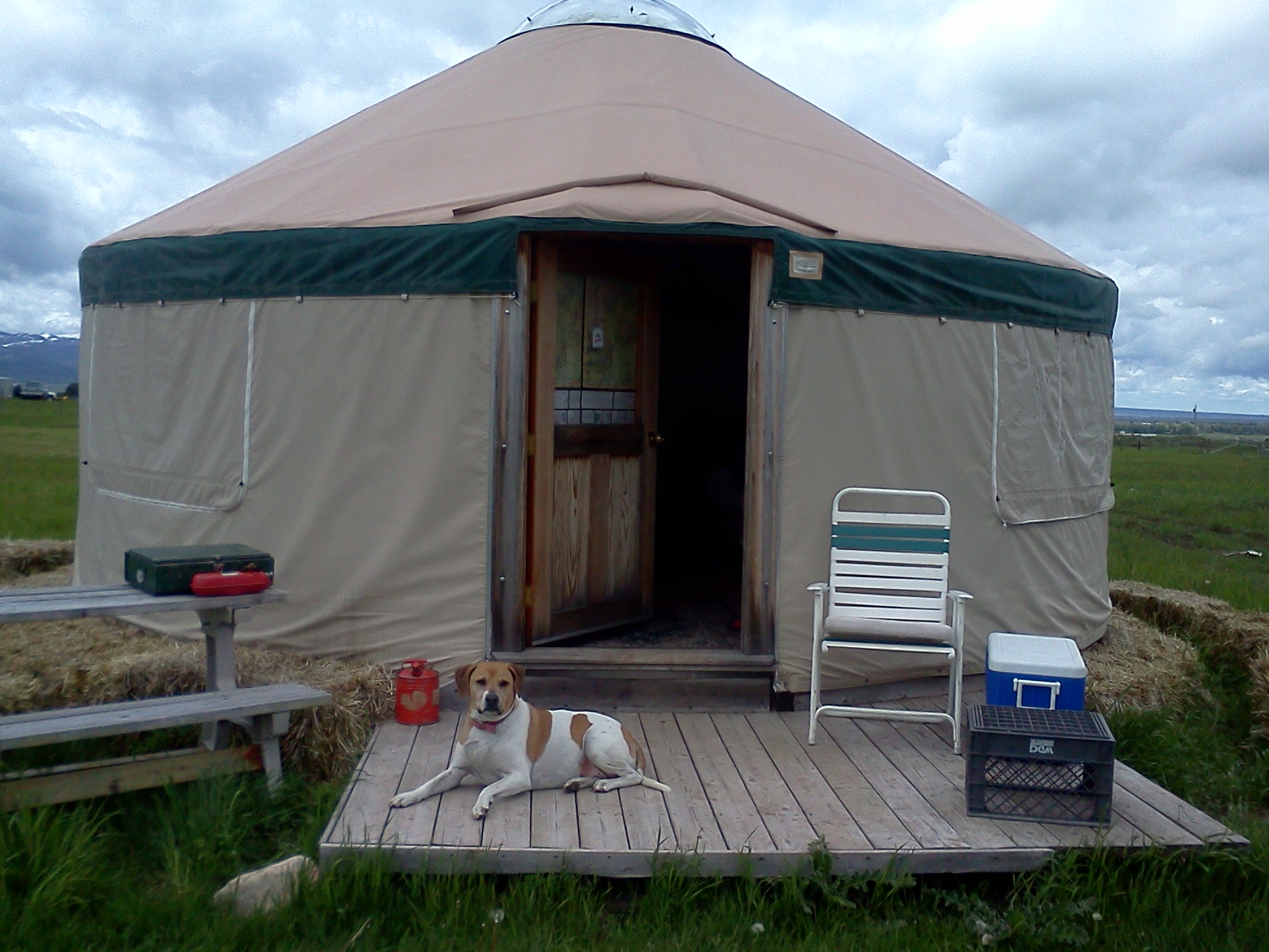 John Drew's dog, Holli, lying in front of NOLS Teton Valley yurt.